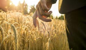Impermanência Mindfulness e a Morte